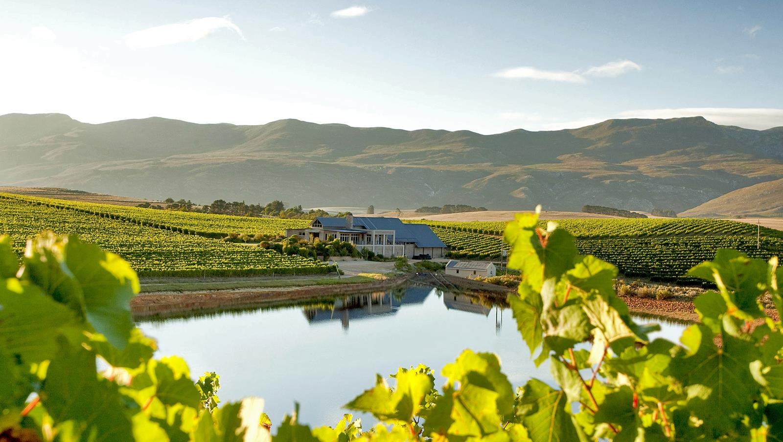 Creation Vineyard/Image source: www.creationwines.com
