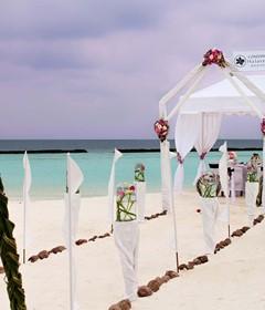 Weddings and Honeymoons - 1