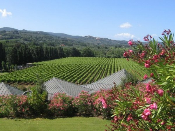 Gaja vineyard in Piedmont, Italy