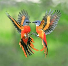 Beautiful birds – the inspiration for Valentine's Day?
