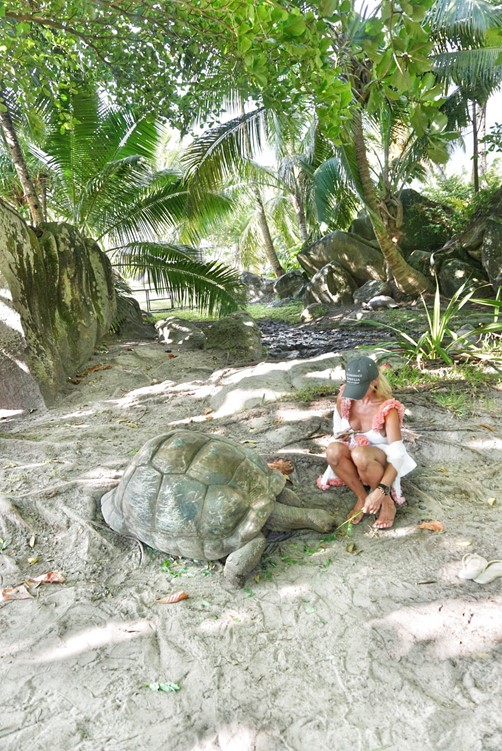 Tortoise|Constance Ephelia Seychelles