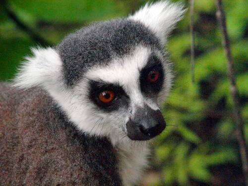 Famous Lemurs of Madagascar Credit: Our Place